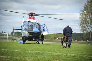Under en vecka varje år intensivtränas alla länets polishundar. Just nu pågår träningsveckan i Vallsta. Ett moment är att hundarna ska acceptera att flyga helikopter.