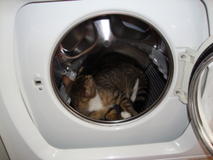 Tequila tycker att det är skönt och ligga i tvättmaskinen!!!!!!