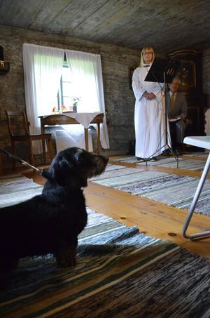 Inbjuden. Ludde var ett av husdjuren som fick följa med på gudstjänst. Han och husse Lars Erik Saxholm bor i Grythyttan. Marie-Louise Danielsson-Tham höll i dagen.