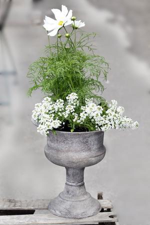 Den lätta och nätta klassiska urnan (395 kronor) ger herrgårdskänsla. Från Bleke blommor