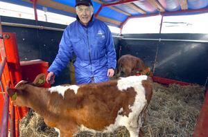 Två blivande mjölkproducenter i Roger Kvarnängs ägo.