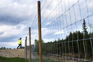 Ungefär 1,5 mil viltstängsel kommer att finnas längs nya E4 Sundsvall.