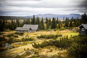 Mellan fjället Svanhågna i bakgrunden och upp mot fäbodvallen i förgrunden sträcker sig naturreservatet Sörvallen-Mellanåsen, ett av de största sammanhängande skogarna som fått skydd i länet.