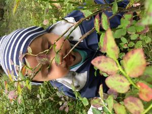 Sigge Grimaldi äter blåbär medans mamma Karin och mormor Sibylla plockar svamp inga blåbär i korgen allt lilla maggen