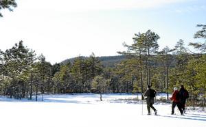 På vandring med snöskor. I Bergslagens vildmarker. Naturupplevelsen är stark.