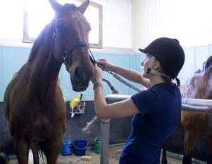 Perfekt kombination. Sofia Fredriksson ser instruktöryrket som en möjlighet att kombinera hennes två passioner: hästar och barn.