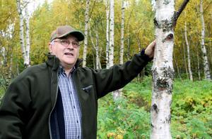 När Per-Anders Skoglund för 19 år sedan planterade den här blivande björkskogen visste han inte att det var masurbjörk han planterat. Ett trädslag som sällan odlas i Sverige, trots det höga pris fin masur kan ge.