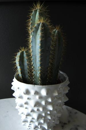 Kaktus är en favorit hemma hos familjen Andersson/Löfdahl.