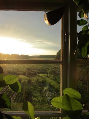 Tidig sommarmorgon vid 5-tiden från vårt fönster mot öster, med ett underbart gyllene morgonljus strömmandes in i rummet.