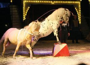 Cirkus skratt har inte så mycket djur. Men hästnumren var mycket uppskattade.