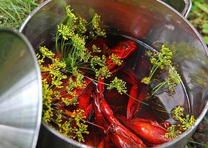 Ny kräftlag till redan kokade kräftor är vägen till riktigt goda kräftor.    Foto: Dan Strandqvist