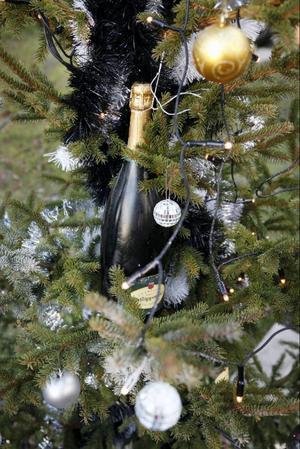 """Sollefteåbördige Kristoffer """"Stoffe"""" Andersson satsar på bubbel och disco för att vinna julgranstävlingen."""