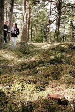 Nära monument. Gammal skog har avverkats alldeles i anslutning till monumentet över Sveriges första aviatris på Edö. Mats Andersson och Anna Ahnér i Naturskyddsföreningen anser att stora värden gått förlorade. Foto: Alexander Lindhe