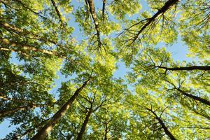 Trädens löv färgas gula när den mörka och svala hösten kommer.