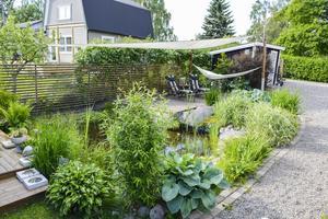 Vid dammen trängs olika sorters irisar och gräs.