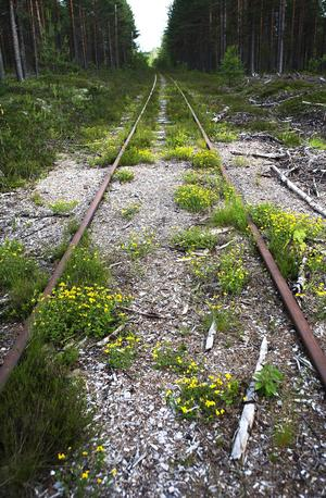 Det är många år sedan det rullade tåg efter Inlandsbanans södra del, men nu kanske det är närmare att den öppnas igen, än det varit på många år.