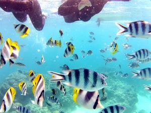 Korallreven i söderhavet är fyllda av färgglada fiskar. Bilden är tagen på ett rev i lagunen på Bora Bora.