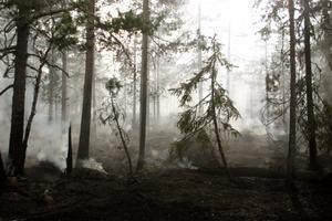8-10 hektar skog brann upp i Trönö.