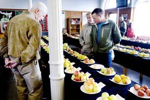 """SORTBESTÄMNING. Susanna Nyström och Magnus Svärd tog med sig fem sorters äpplen som de ville ha hjälp att identifiera. De fick troliga namn på fyra av dem. """"Det är lite kul att veta vad det är för något, så det får vi skriva upp"""", säger Susanna."""