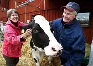 Foto: ANNAKARIN BJÖRNSTRÖM God djuromsorg. Maja och Lars Holmström får i dag distriktsveterinärernas utmärkelse för god djurhållning. På bilden klappar de om mjölkkossan Svea som är dräktig och ska kalva någon av de närmaste dagarna.