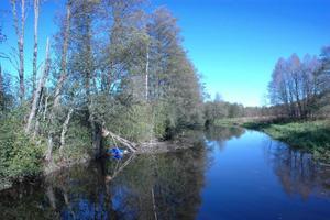VACKERT. Tierps kommun planerar att göra dammar för att rena dagvatten som går ut i Tämnarån nedanför Vallskoga i Tierp.