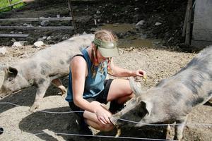 Ingrid Hellberg med Linderöddsvinen Madde och Vickan som hjälpt till att böka upp jorden till odlingen och potatislandet.