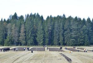 Tegar. Fem ekipage är försedda med fem lika stora ytor, 60 gånger 11 meter.