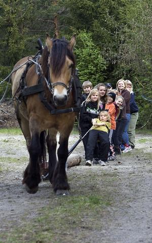 Nordsvenska hästen Lindeman tyckte inte det var så jobbigt att dra på hel fjärdeklass från Malsta skola.
