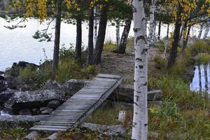 Skogs badplats.