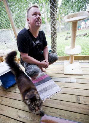 Katterna verkar trivas bra på pensionatet. Det gör Roger Larsson också.