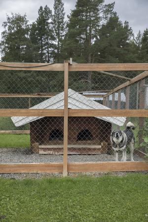 I hundgården finns ett timrat hundhus.