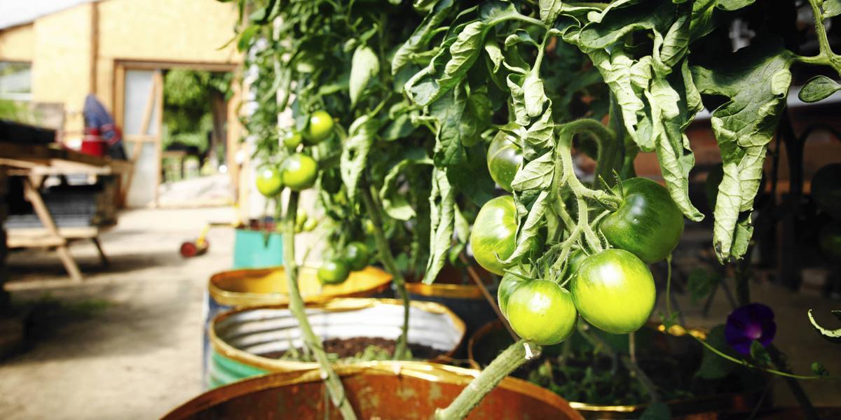 Naivt att odla grönsaker på gågatan