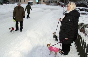 Dan Edlund är ute med hunden Stina som är av rasen jack russel. Även Stina är påklädd med en sorts täcke.