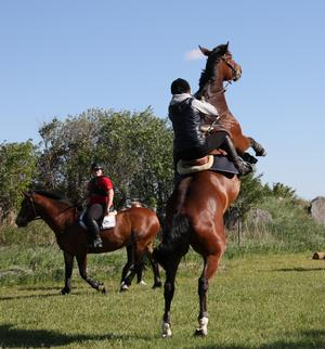 Det är inte alltid ryttare och häst är överens.