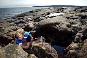 Ilka von Dalwigk och andra geologer älskar klipphällar, eftersom de är fria från döljande växtlighet.