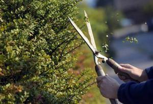 Häcksaxar och allt som går att klippa eller skära med orsakar en mängd skador varje år.
