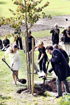 När de planterade trädet sade Daniel till Annica Gullberg: om ni någon gång ser två initialer inristade på trädet, så är det för att vi har suttit under det.