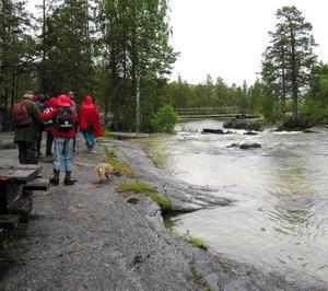 Tåliga vandrare räddes inte regnet.              Foto: Allan Borgsten