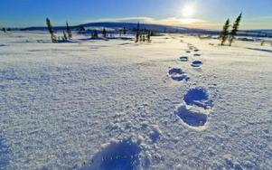 Snöskor i snön i Alaska. Här bodde och verkade diktaren John Haines som nu introduceras på svenska av Per Helge. Foto: Scanpix
