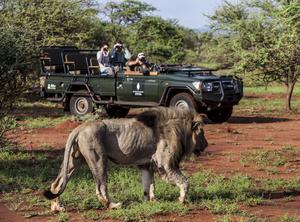 Att stöta på en annan safarijeep under någon av turerna är mer ovanligt än att se ett lejon.