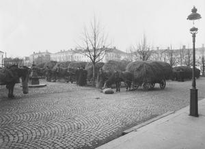 Stortorget 1910. För hundra år sedan var hästar och halm en grundbult i den svenska jordbruksekonomin. Fotograf: Carl Larsson