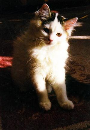 """""""Sussie Lou kom hem till mig som liten kattunge efter en tuff start i livet. Hennes kattmamma var borta emellanåt, vilket gjorde att hon fick för lite modersmjölk och trygghet. Av mig fick hon modersmjölkersättning. Hon hade ett stort snuttebehov och under ett års tid snuttade hon på min öronsnibb. I dag som vuxen katt är hon en otroligt söt och kelen knäkatt och sängkamrat utan snuttebehov. Hon älskar att vara ute men går aldrig ifrån mig."""""""