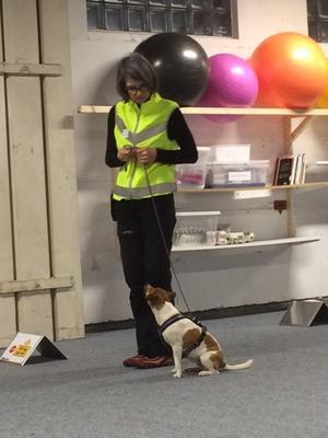 Falu hundsällskap har ett brett utbud av aktiviteter.