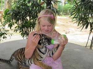 Vid en utflykt i Tahiland, träffade Elin Ramkvist på en tiger unge som var riktigt hungrig.