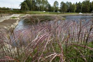 Det är både harmoni och variation bland växterna i parken.