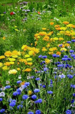 Låt gärna en del av trädgården vara ängstomt, det får nyttodjuren att trivas.
