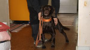 Hunden Spot genomsöker en lägenhet i Borlänge efter vägglöss.
