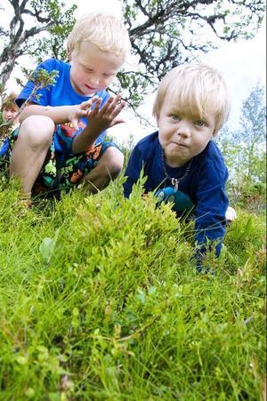 Totalt kommer sex barn att vara inskrivna på Vaerien maanah, Jonas Johansson och Ante Johansson är två av dem.