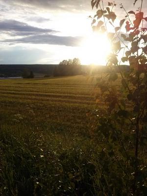 Solnedgång i Bergsviken, Svenstavik.