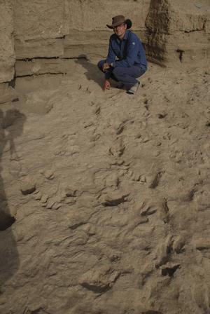 De fossila fotspåren vid Ileret sträcker sig över att stort område. De visar att Homo erectus levde i stora grupper.   Foto: Matthew Bennett/TT